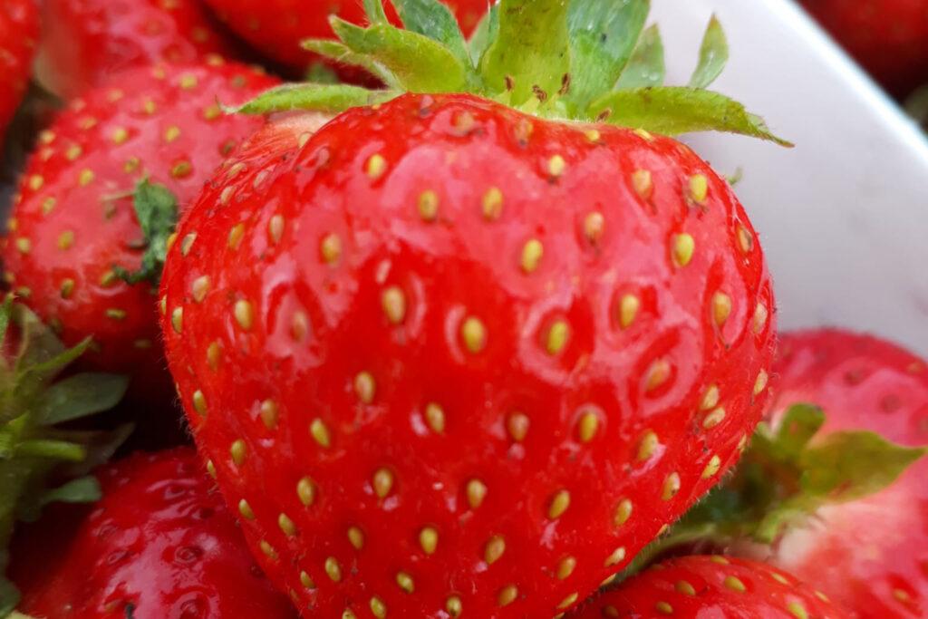 Erdbeeren Tägerwilen