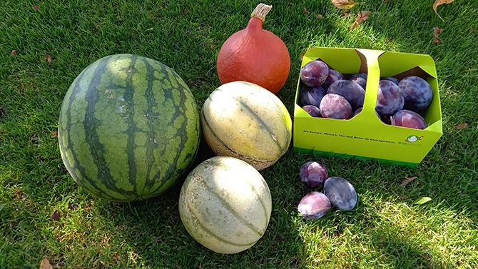 Tägerwiler Melonen Zwetschgen Kürbisse 670x377
